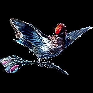 Vogel, Zeichnung, Malerei, Barock, lieblich