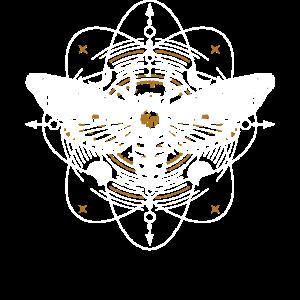 Falter Schmetterling Mythisch Himmlisch
