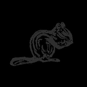 Eichhörnchen Handgezeichnet