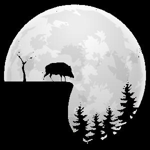 Wildschwein Mond Jagen Wildsau Vollmond Jäger