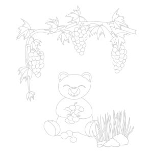 Coloring picture teddy bear with grapes