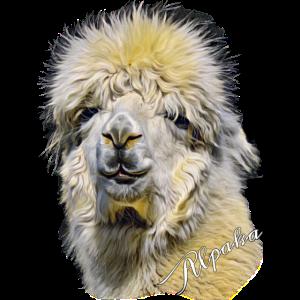 Alpaka - Alpaca Kopf