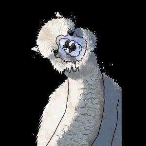 Alpaka mit schiefgelegtem Kopf
