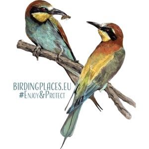 Bee-eaters Birdingplaces