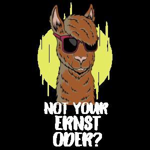 Nicht dein Ernst Not your Ernst Cooles Lama Alpaka