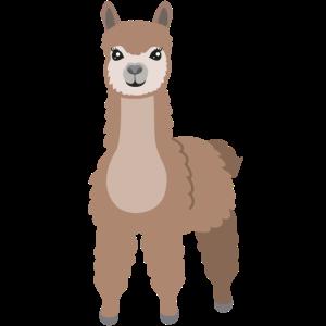 Alpaka Lama Geschenk Kamel Niedliche Zoo Tiere