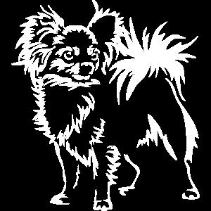 """Chihuahua""""Black Edition"""""""