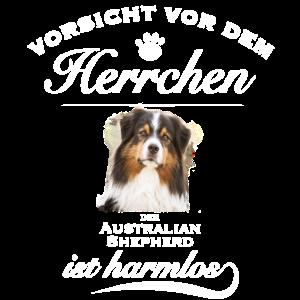 Aussie - Aussie Hund - Australian Shepherd