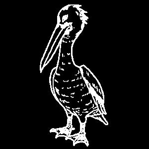 Pelikan Silhouette Wasservogel Vogel Südsee