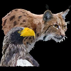 Lynx und Pigargo