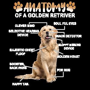 Golden Golden Retriever Hund