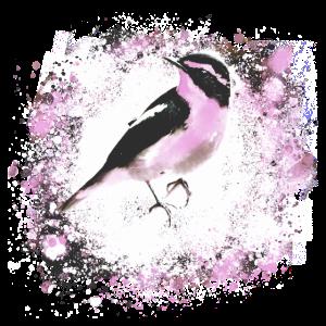 Vogel, Zeichnung, Malerei, meise,rosa