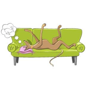 GreyhoundSofa