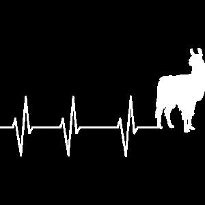 Lama, Alpaka Herzschlag