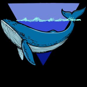 Tier Blauwal Tierwelt