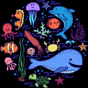Tierwelt Blauwal Lebewesen