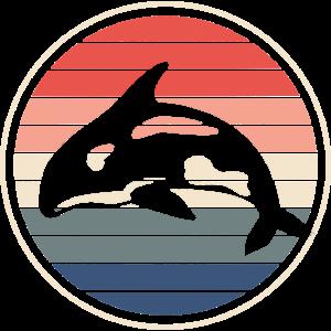 Orca Wal
