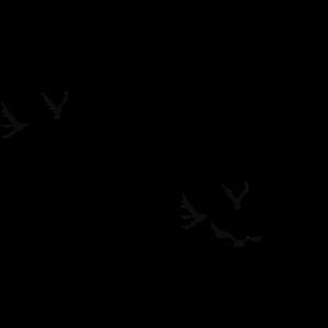 Rabe Freiheit Vogel