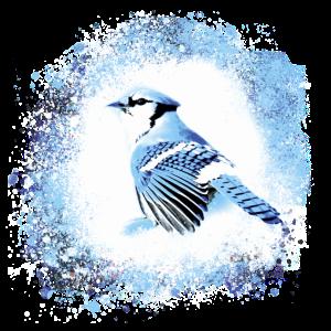 Vogel, Zeichnung, Malerei,pastell, blau, grau