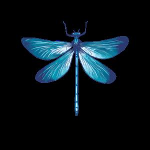 Libelle Libellen Insekten Natur Entomologe Biologe
