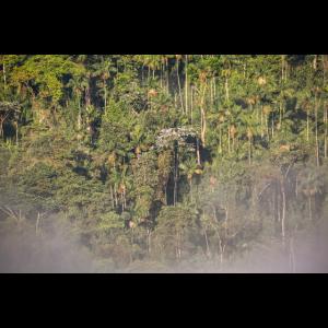 Urwald in Morgennebel und Sonne