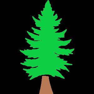 Tanne Nadelbaum Wald Naturschutz