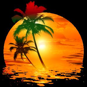 Travel Exotic Palmen Sonne