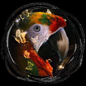 Papagei Ara Vogel Schmetterling Tier Bunt Gold