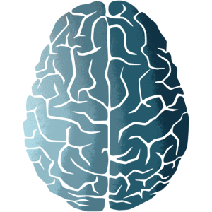 Gehirn Verlauf