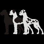 Schwarz Mantel und Gefleckt Doggen