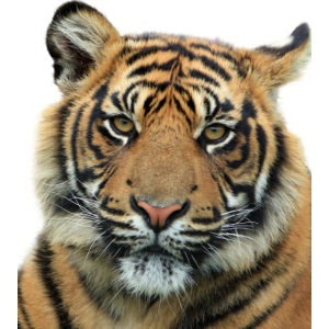 tiger 714380