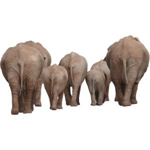 elephant 1049840