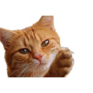cat 1274094