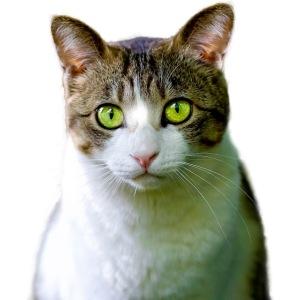 cat 1274101