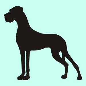 Kleinste Dogge im Stand