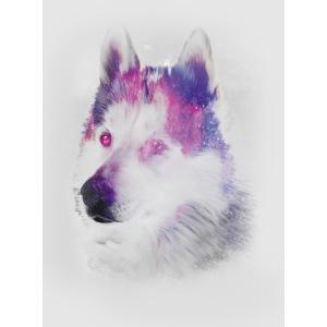 Pies husky
