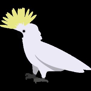 Cackatoo