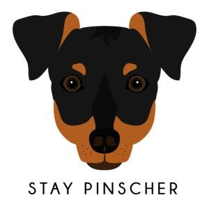 Pinscher - Black