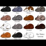 Rex Rabbit Colours