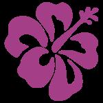 Hibiskus Blume