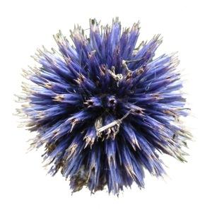 flowerburst120dpi