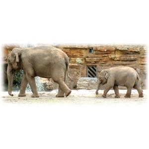 elephants120dpi