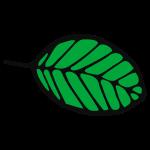 Blatt, Laub, Baum, Herbst