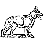 duitseherdervec01