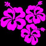 Hibiskusblüte Hibiskus