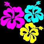 Hibiskus Hibiskusblüte