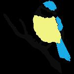 Blaumeise Vogel Meise