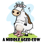 A Middle Aged Cow