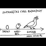 nak_cykl_rozwoj