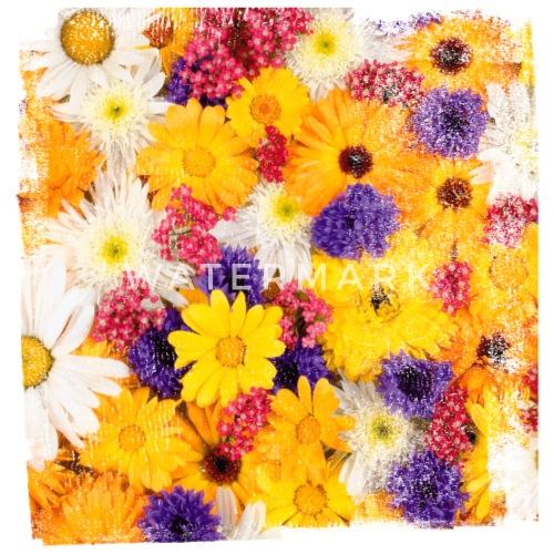 Blume Blumen Fruhling Fruhjahr Natur Garten Bluhen Buttons Klein